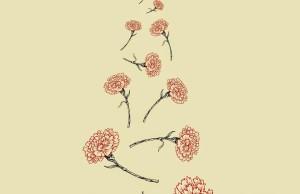 Carnation portada